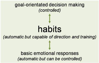 Brain_systems_of_behaviour